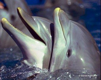 Webquest Dolfijnen Inleiding